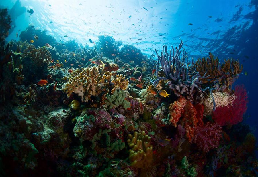 泛斯米兰群岛船宿潜水之旅 潜点