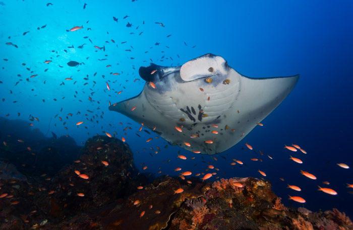 壁纸 海底 海底世界 海洋馆 水族馆 桌面 700_457