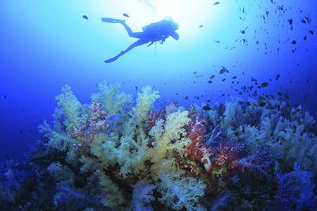 144.Phang Nga-Mu Ko Similan National Park-Diving-0022PS.JPG